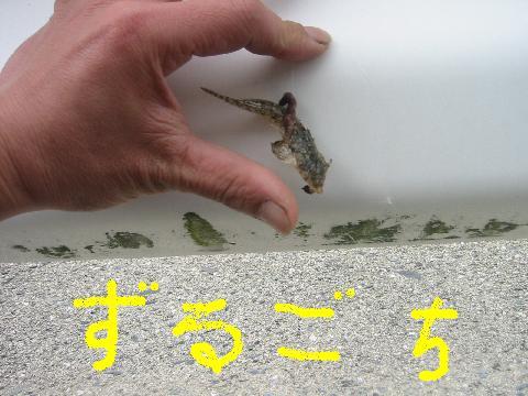 zurugochi.jpg