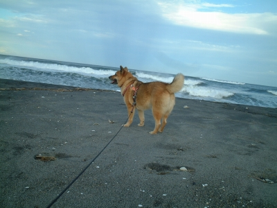 波に注目よ!