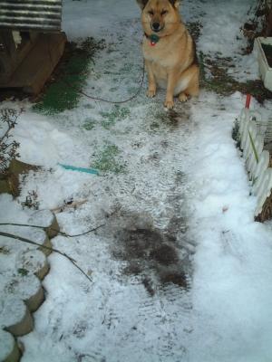 雪をもとかす情熱!