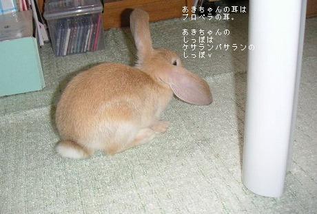 あきちゃんの耳はプロペラの耳。