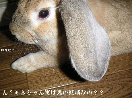 あきちゃんは、兎の妖精??