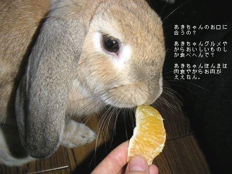 あきちゃん、実は肉食。(ピーターラビット事件参照)