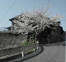 20060522011635.jpg
