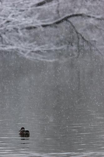 雪の舞う中、ただひとり。