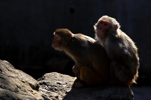 猿の日向ぼっこ