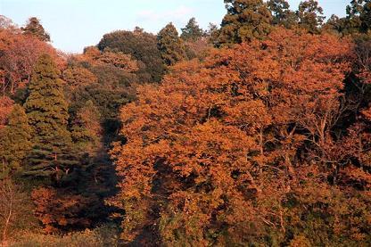 japan(blog2).jpg
