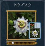 tokeinoyouna1.jpg