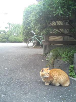 koushoji_20060509_01