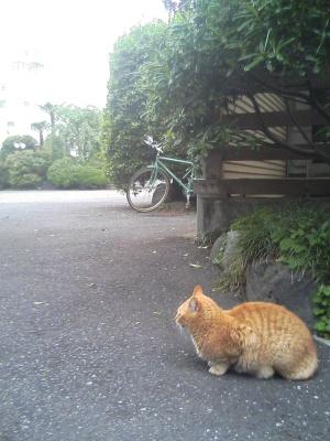 koushoji_20060509_02