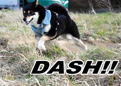 ♪ダッシュダーッシュダッシュ