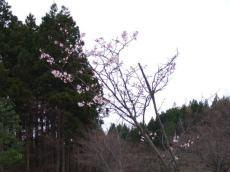 2006/ 4/22#4