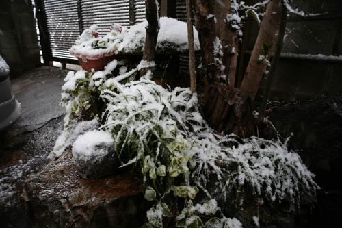 今日は雪が降りました。2