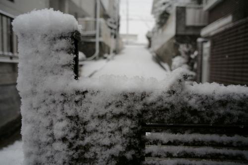 今日は雪が降りました。3