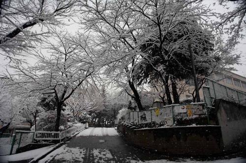 今日は雪が降りました。7