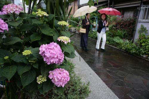 堀切の紫陽花1