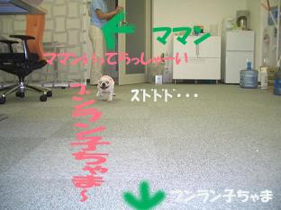 20050612161636.jpg