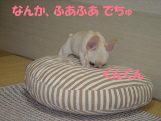 20050709230111.jpg