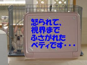 20050718154033.jpg