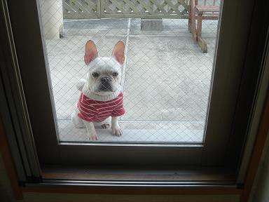 入れてくだちゃい・・・・