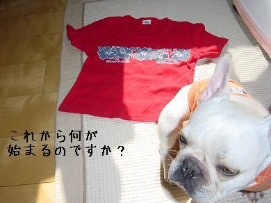 20061101155417.jpg