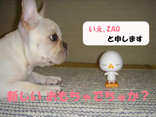 ZAQ1.jpg