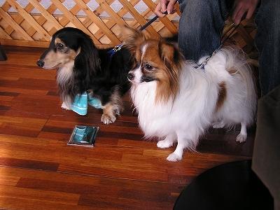 s-dogcafe.jpg