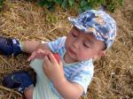 イチゴ畑でツマミ食い1