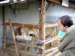 奈良の牧場3
