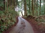 山道の途中