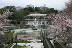 京都旅行で花見(どこの線路だっけ?)