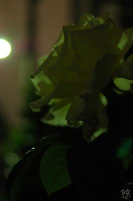 2006_0508_224206AA.jpg