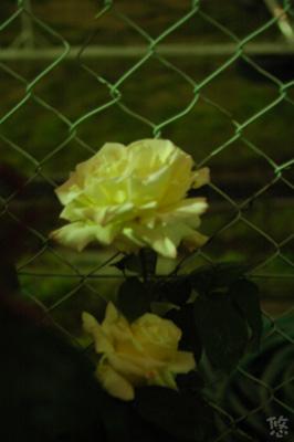 2006_0508_224316AA.jpg