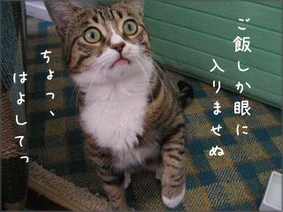 はよ、ごはん、くれ!!
