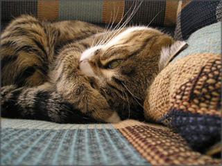 夕飯まで昼寝~だから、目ぇつむってくださいって!~