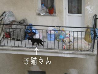 かわいい子猫が隣のベランダに