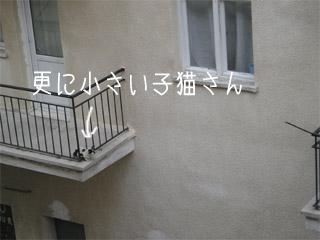ちびっこは窓のさっしに乗る事が出来ません。