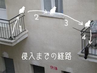 猫の侵入経路