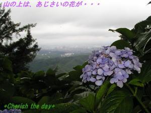あじさいの花☆