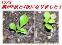幸福の葉061203☆