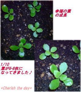 幸福の葉070110☆