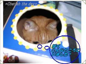 箱猫くり1☆070423