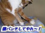 くりとアフラックダック⑤☆