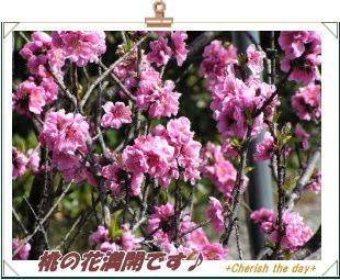 桃の花☆①070311