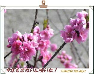 桃の花☆②070311