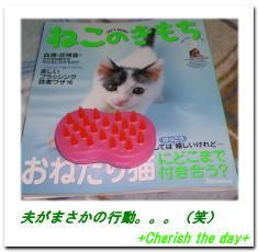 猫用ブラシ☆070209