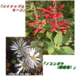 庭の花061031☆