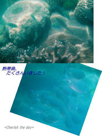 フィッツロイ島のお魚たち☆