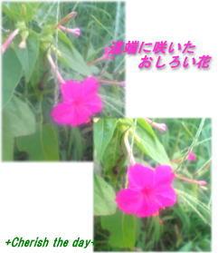 オシロイバナ☆060920