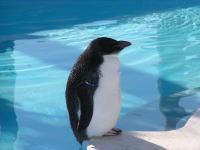ペンギン☆