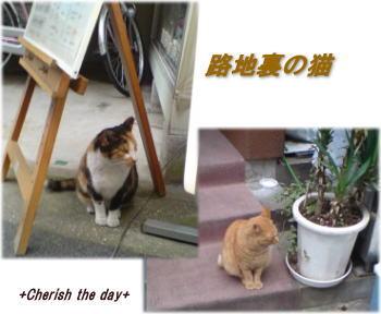 路地裏の猫たち061208☆